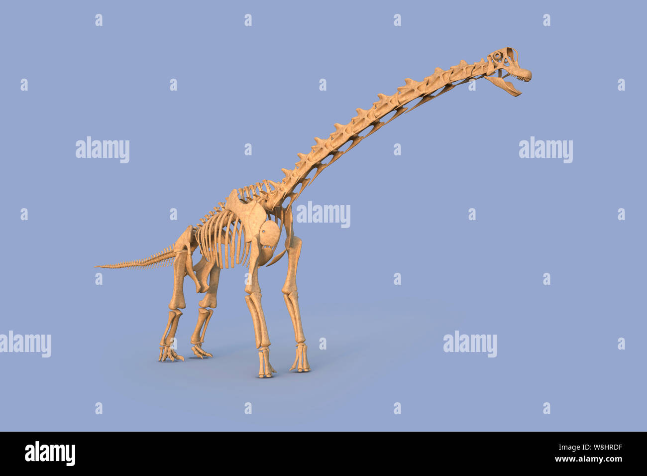 Brachiosaurus dinosaur skeletal structure, illustration. Brachiosaurs lived 154-153 million years ago during the late Jurassic period. Stock Photo