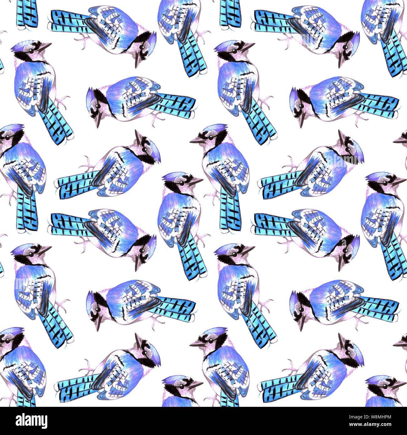 Blue Jay or Cyanocitta cristata bird seamless watercolor birds painting background Stock Photo