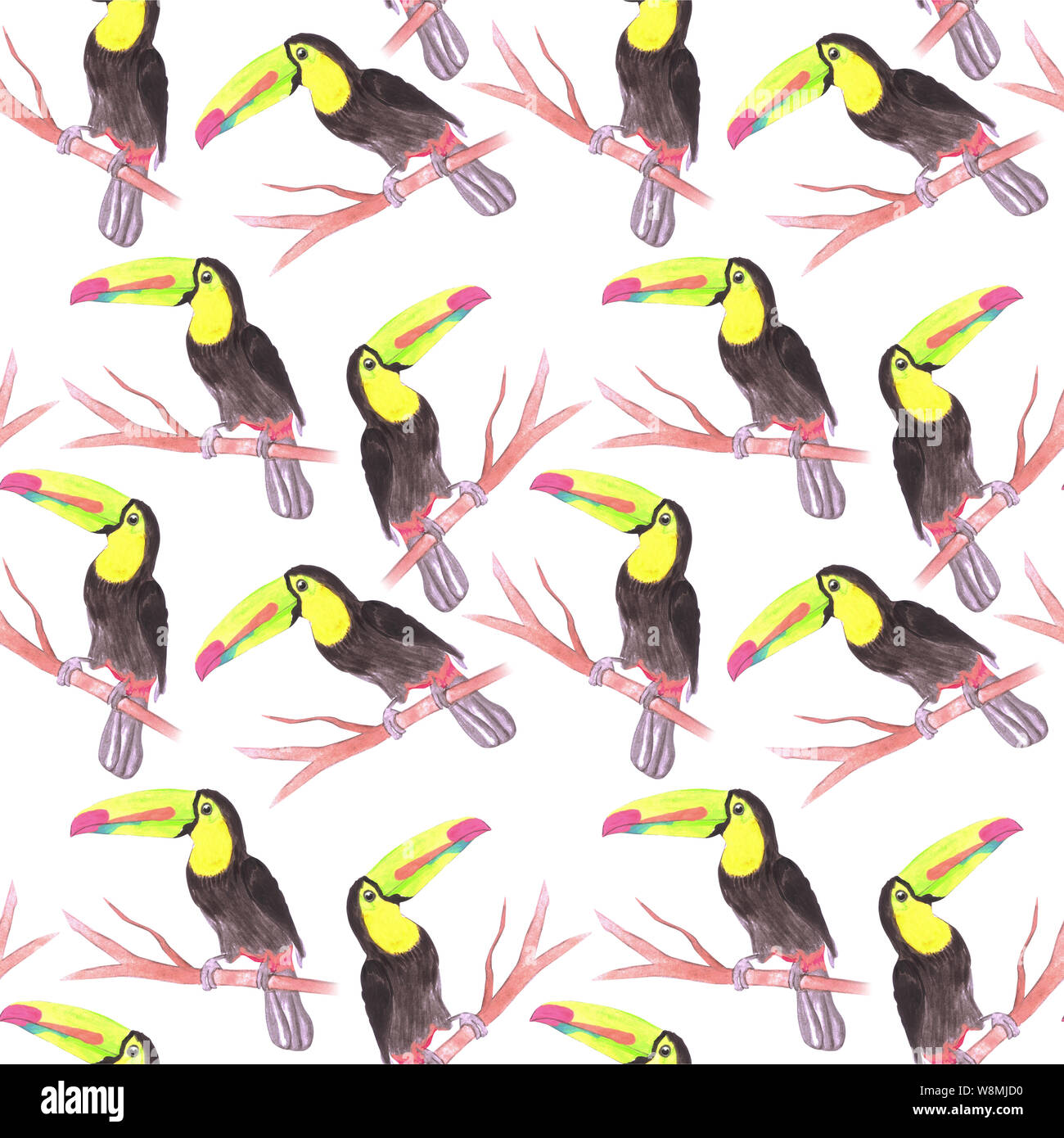 Keel billed Toucan or Ramphastidae sulfuratus bird seamless watercolor birds painting background Stock Photo