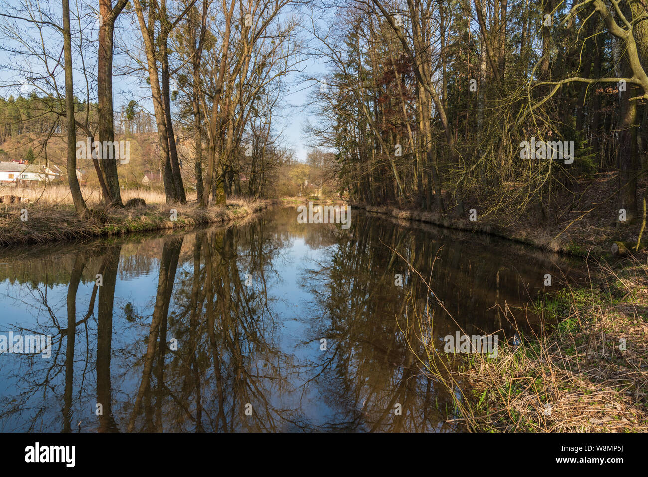 Trebuvka river with trees reflected on water ground near Lostice town in Czech republic during beautiful early spring day Stock Photo