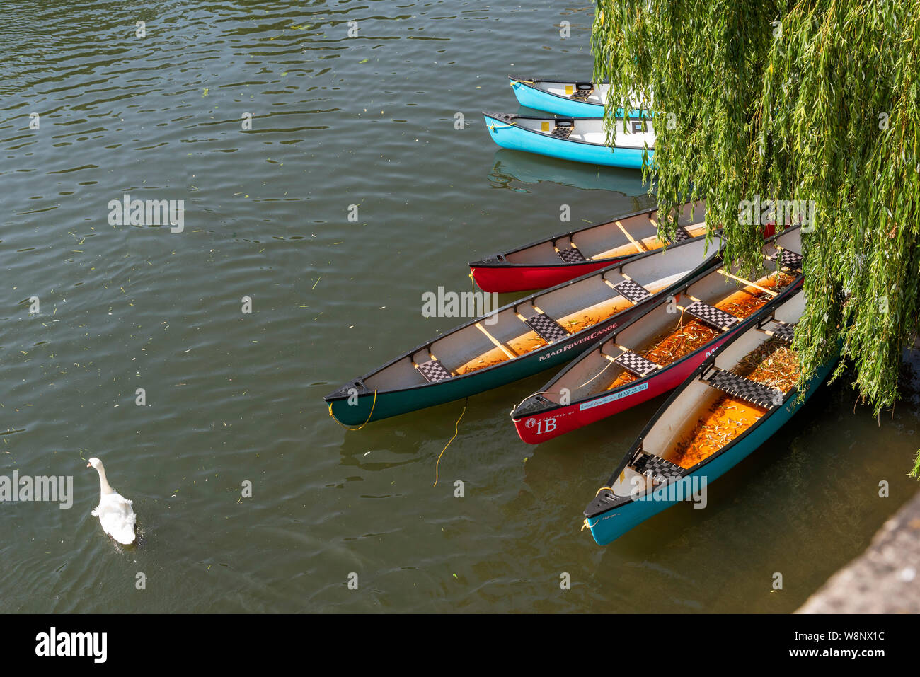 Lechlade, Gloucestershire, England, UK, July 2019. The River Thames at Lechlade on Thames. The highest navigable point of this famous river. Canoes fo Stock Photo