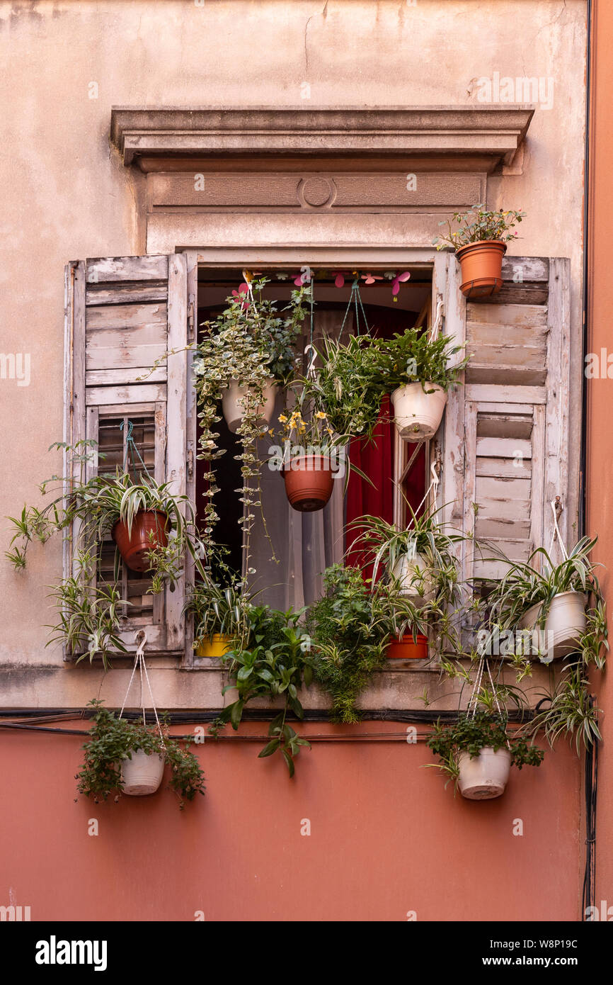 Window with shutters and plants, Split, Croatia Stock Photo
