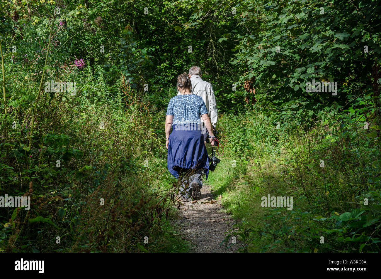A couple on a walk down a trail through woods in the South Staffordshire countryside. Stock Photo