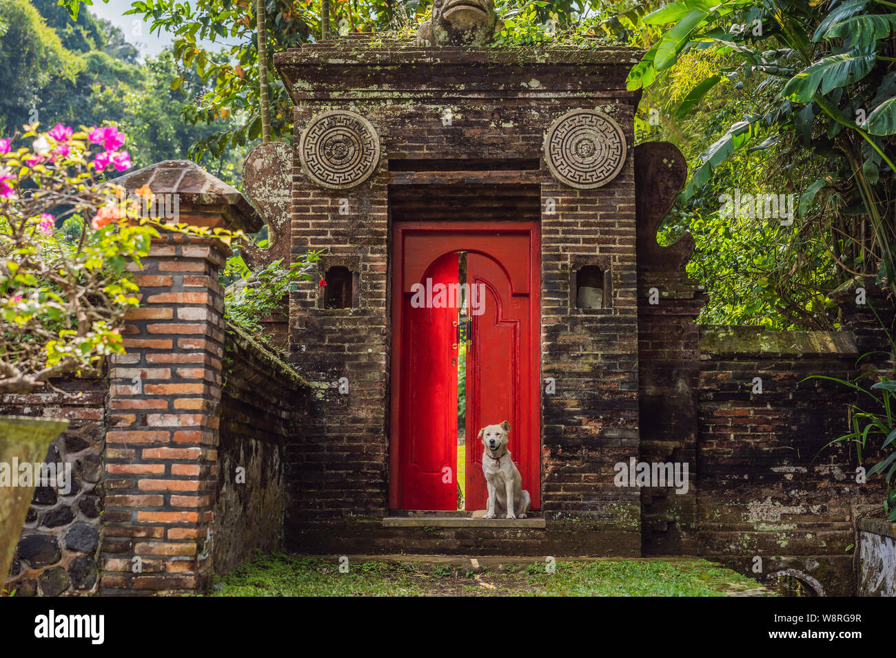 The dog sits on the background of a large red front door Stock Photo