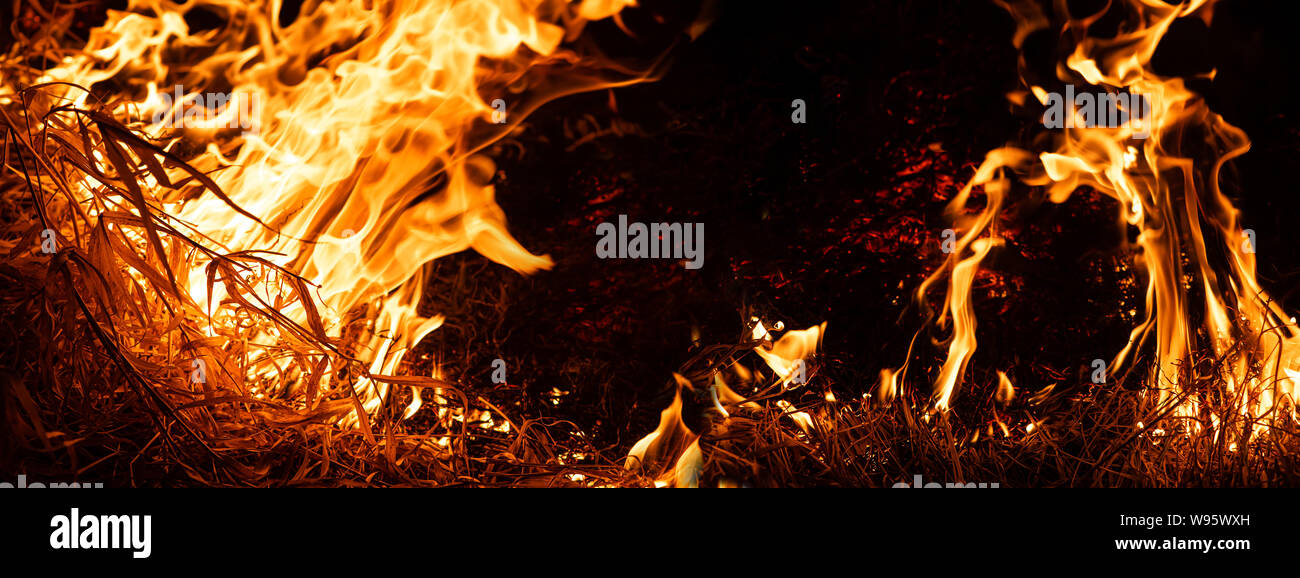 Nature on fire. Night shot. Themes of fire, disaster and extreme events. Background with copy space for text, banner format Stock Photo