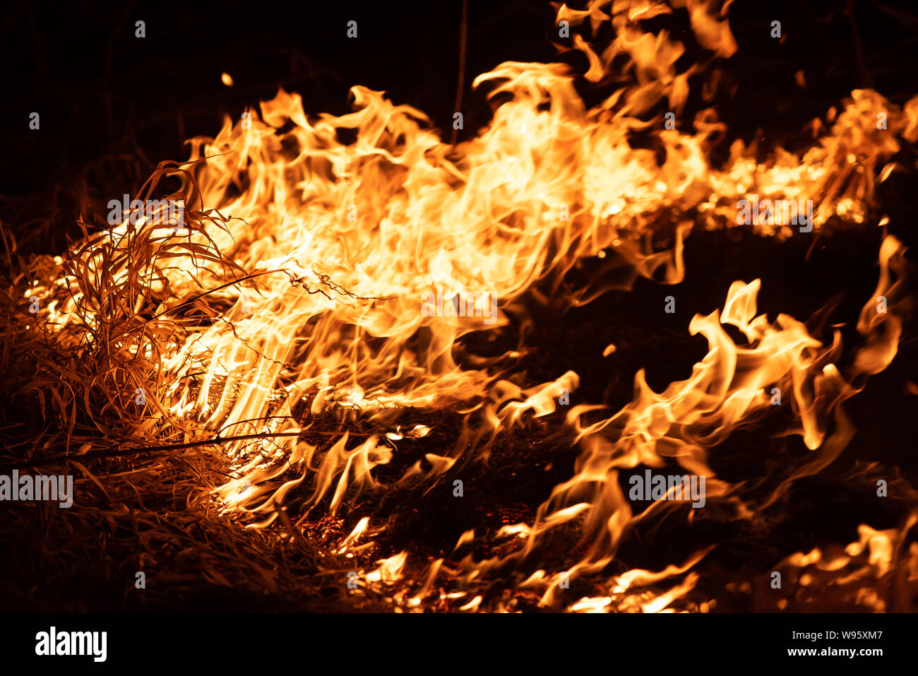 Burning grass in the field, close up. Nature on fire. Themes of fire, disaster and extreme events. Night shot. Stock Photo