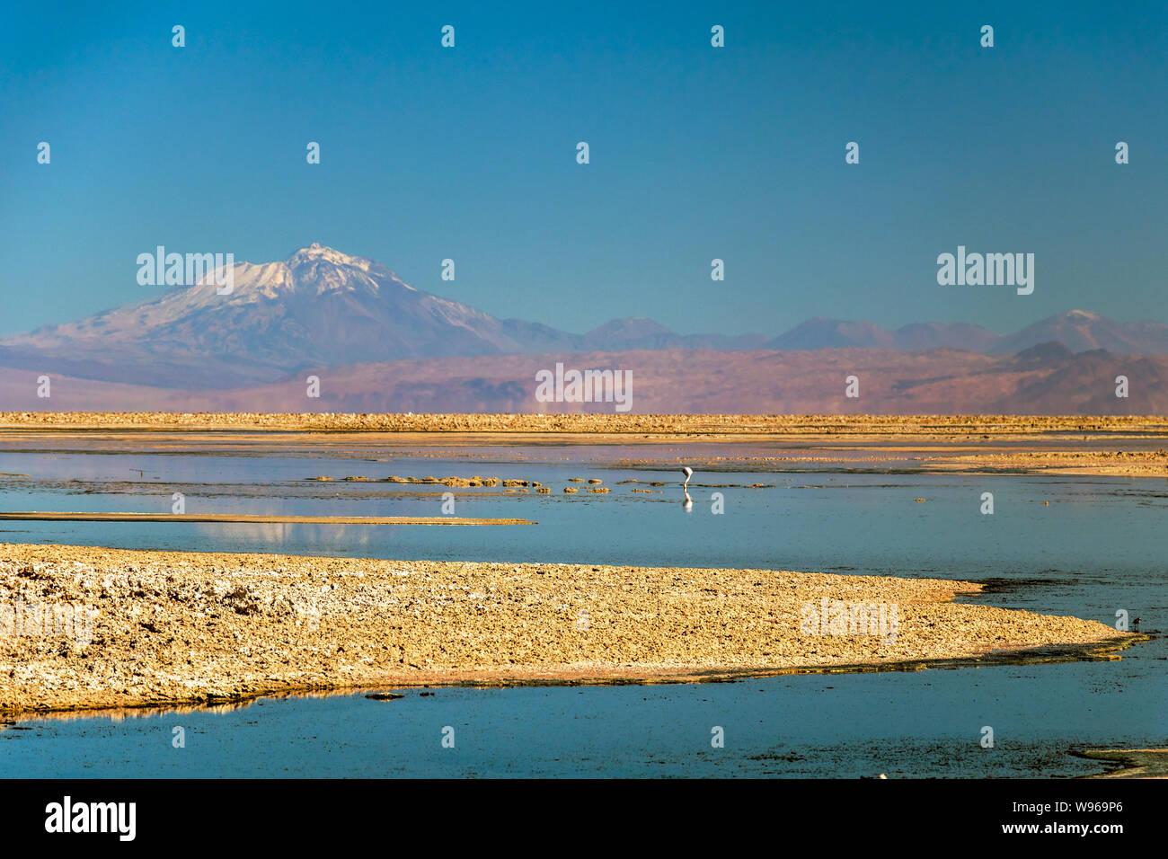 Chaxa Lake (Laguna Chaxa) with reflection of surroundings and blue sky in Salar of Atacama, Chile Stock Photo