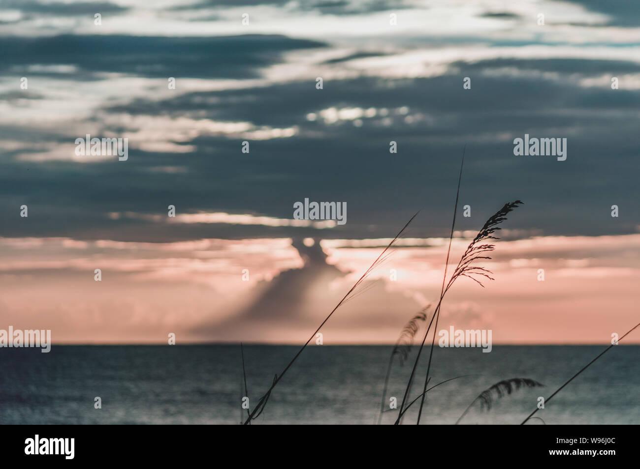 Grass reed enjoying sunset view Stock Photo