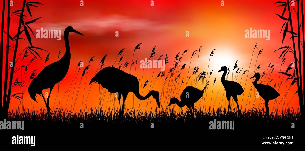 Birds cranes on sunset background. Evening, sky, sun. Birds on a background of grass, bamboo and reeds. Evening landscape. Wildlife scene. Stock Vector