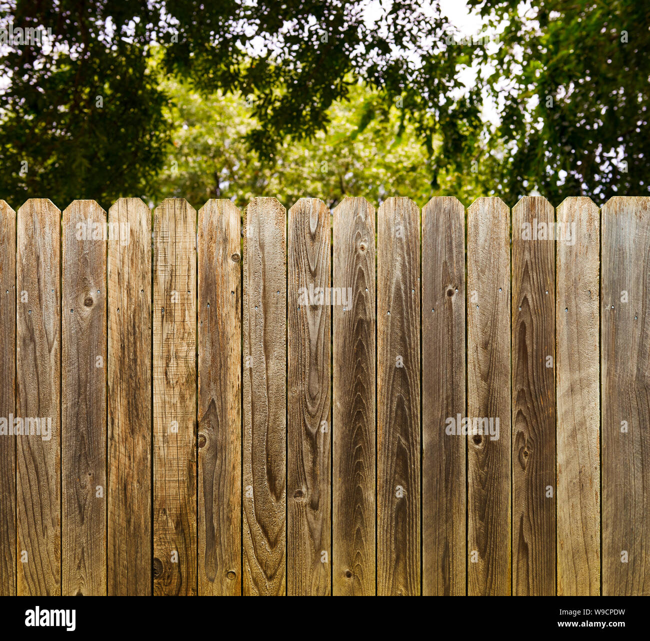 Privacy and security provided by rustic wood fence with green shade tree background Stock Photo