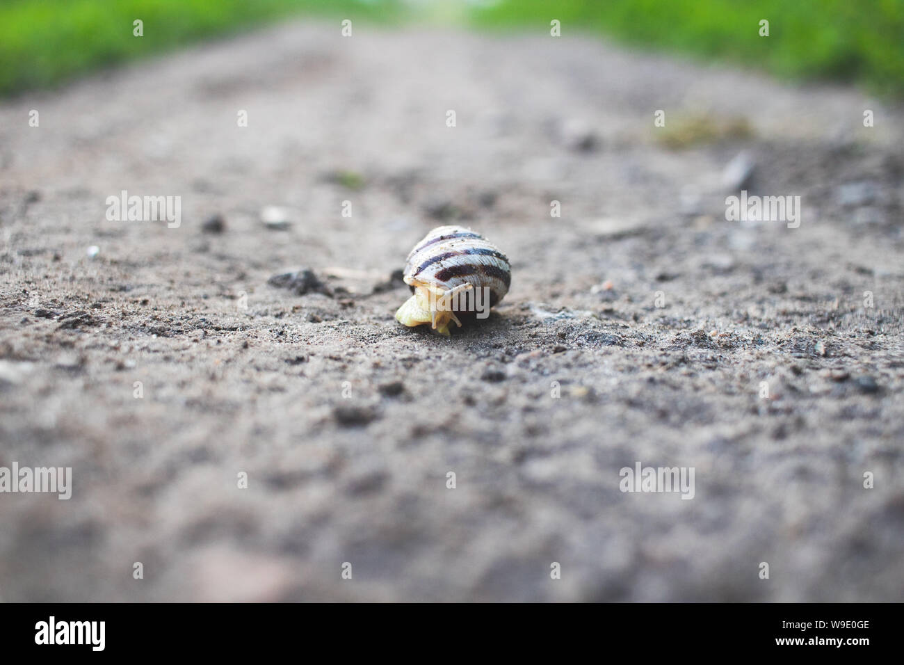 Background and foreground in defocus. A snail crawls on an asphalt road. Stock Photo