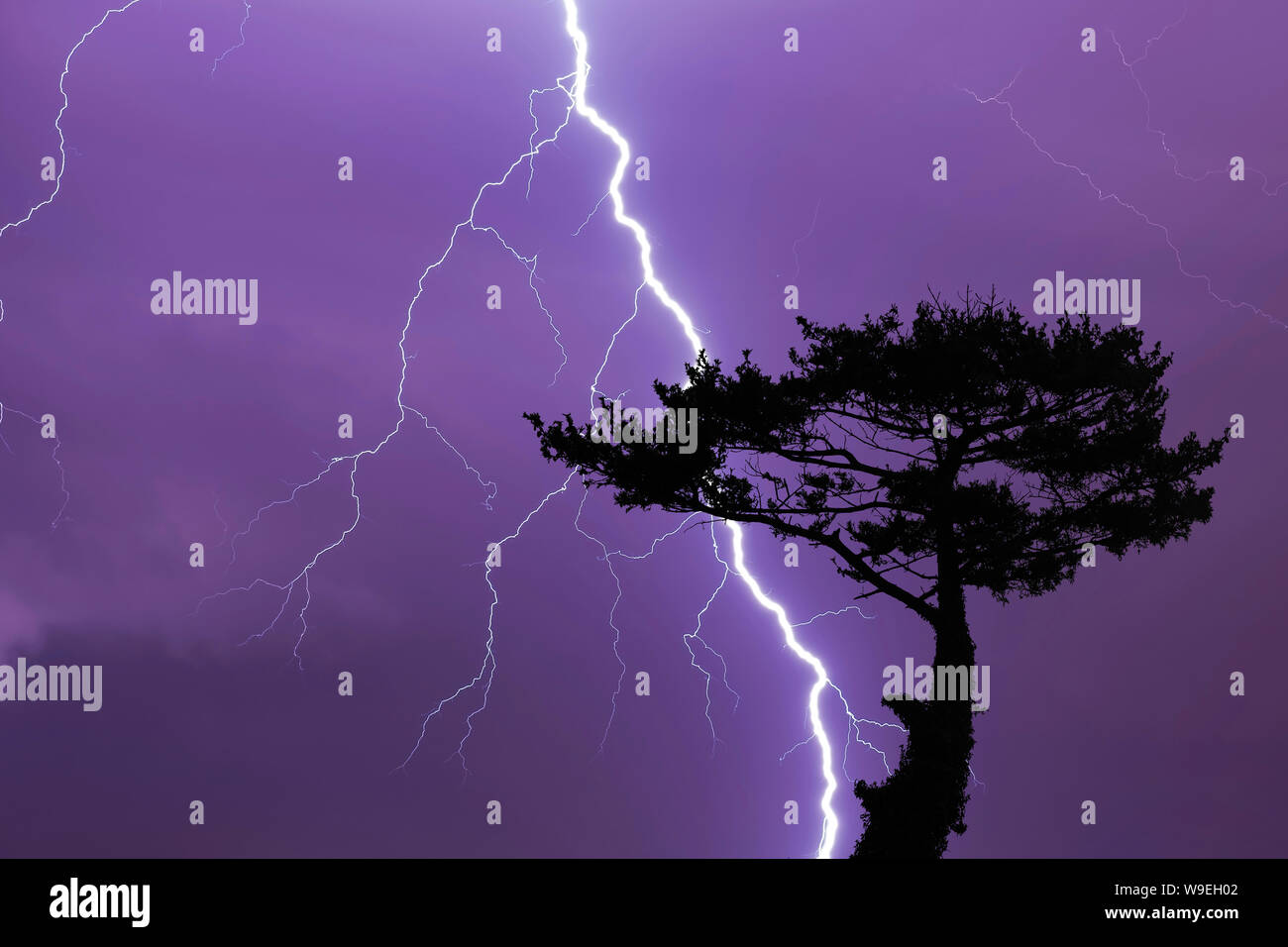Tree and lightning bolt and storm, lightning bolt and thunderstorm at night Stock Photo