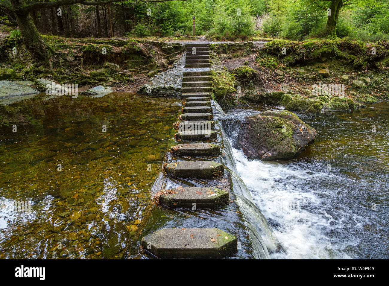 Stepping Stones in the Tollymore Forest Park Stock Photo