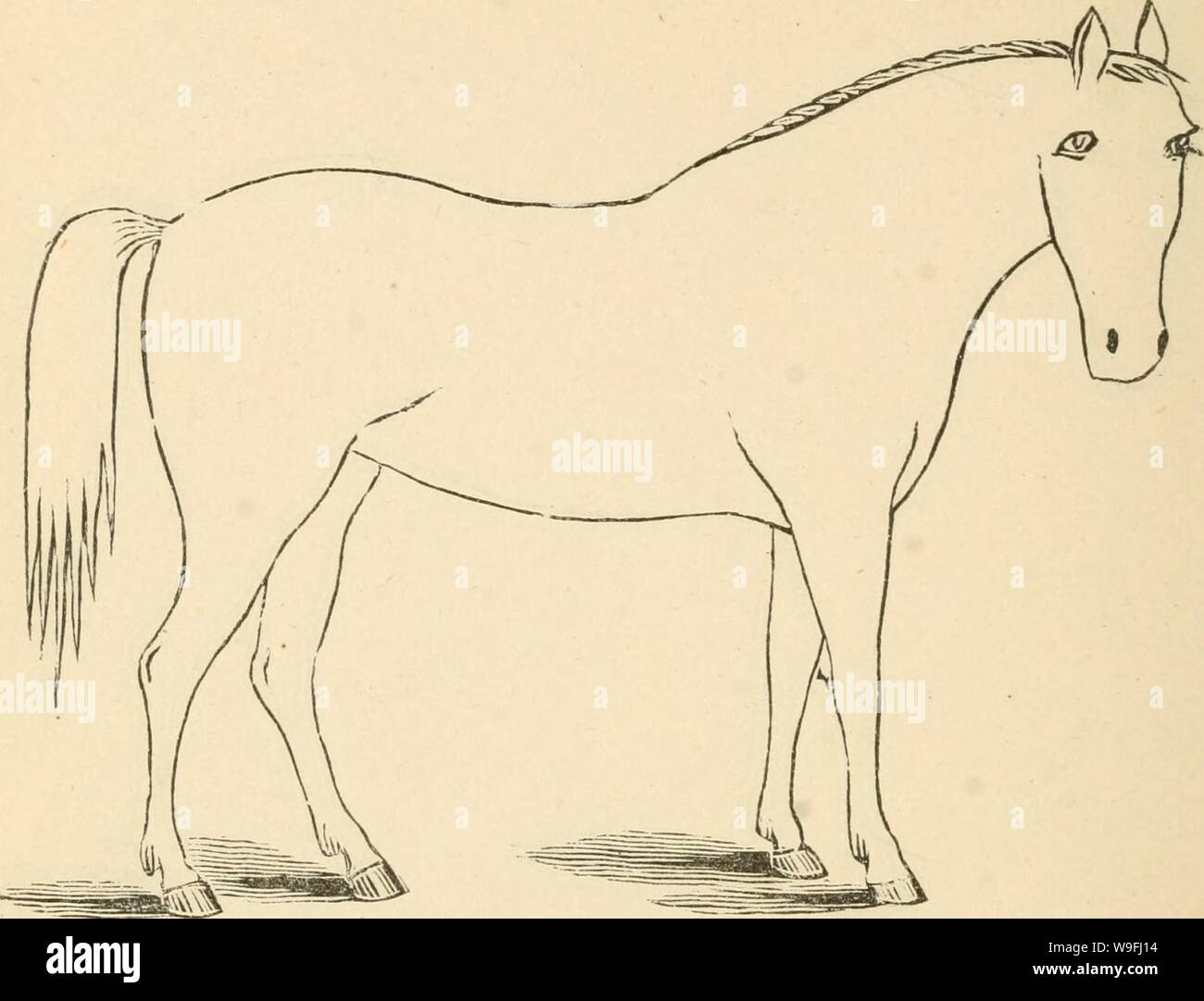 Archive image from page 45 of Cunningham's device for stockmen and. Cunningham's device for stockmen and farmers  cunninghamsdevic00cunn Year: 1882 ( DESCRIPTION Color Marks Height Stock Photo