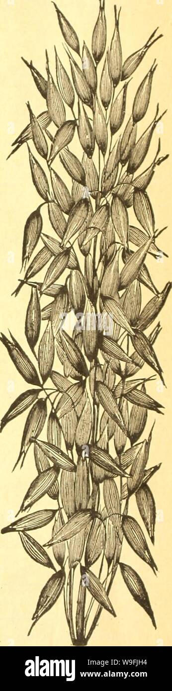 Archive Image From Page 47 Of Currie S Farm And Garden Annual Currie S Farm And Garden Annual