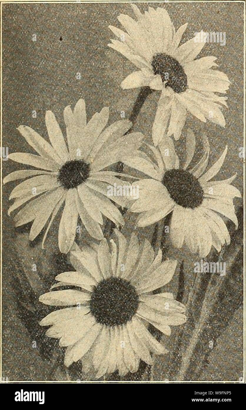 Archive image from page 58 of Currie's farm and garden annual. Currie's farm and garden annual : spring 1926  curriesfarmgarde19curr 9 Year: 1926 ( LIST OF TESTED FLOWER SEEDS FOR 1926. 53 CHRYSANTHEMUMS This magnificent class of summer blooming annuals should be In every flower garden. The single ones are particularly handsome, many of them producing tricolor flowers of great brilliancy in color- ing. The Double Perennial sorts should be sown early in the spring for flowering the same fall. SIIVGLE ANNUAL, CHRYSANTHEMUMS. Painted Daisies, or Marguerites. Pkt. BurridgeanumâCrimson, â white cen Stock Photo