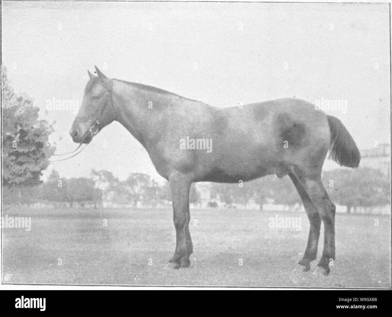 Archive image from page 388 of Points of the horse; a Stock Photo