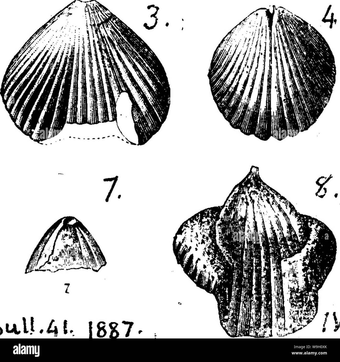 Archive image from page 451 of A dictionary of the fossils Stock Photo
