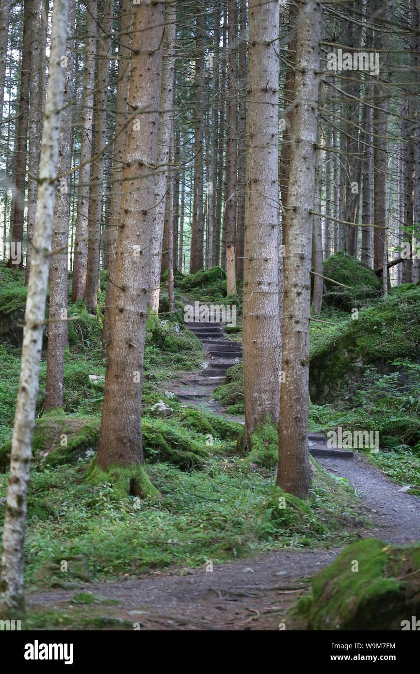 idyllischer Wald beim Piburger See Stock Photo