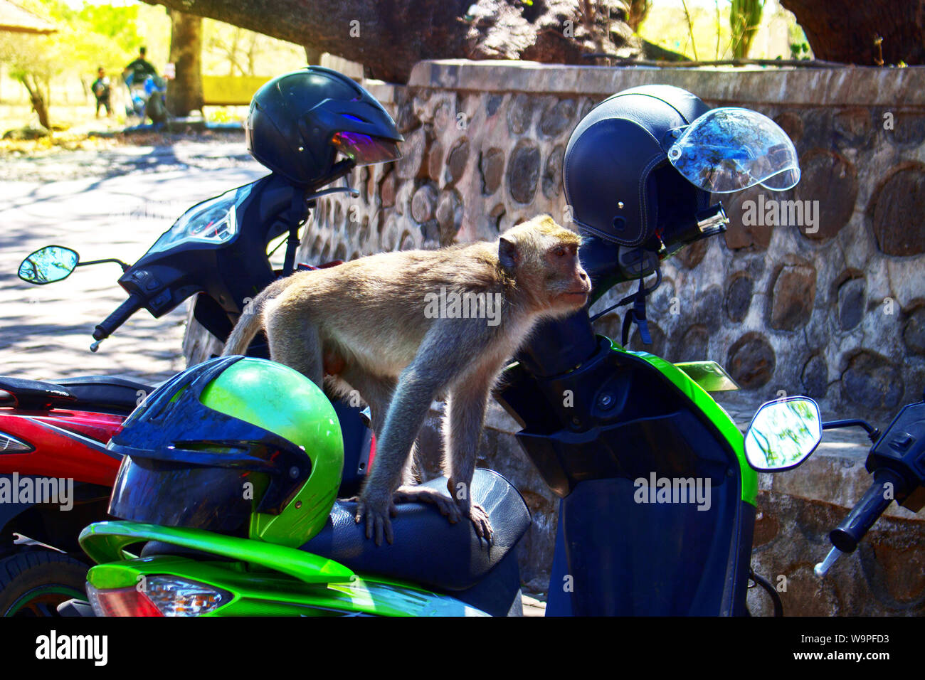 A Monkey Sit on Green Motorcircle With Helmet in Parking Lot Stock Photo