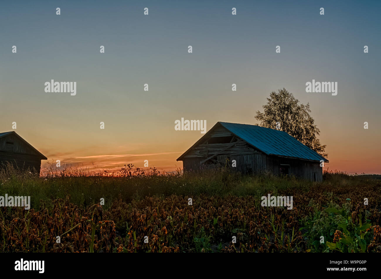 Old barn houses by a potato field on a late summer evening at the rural Finland. The sunset is coloring the night sky beautifully. Stock Photo