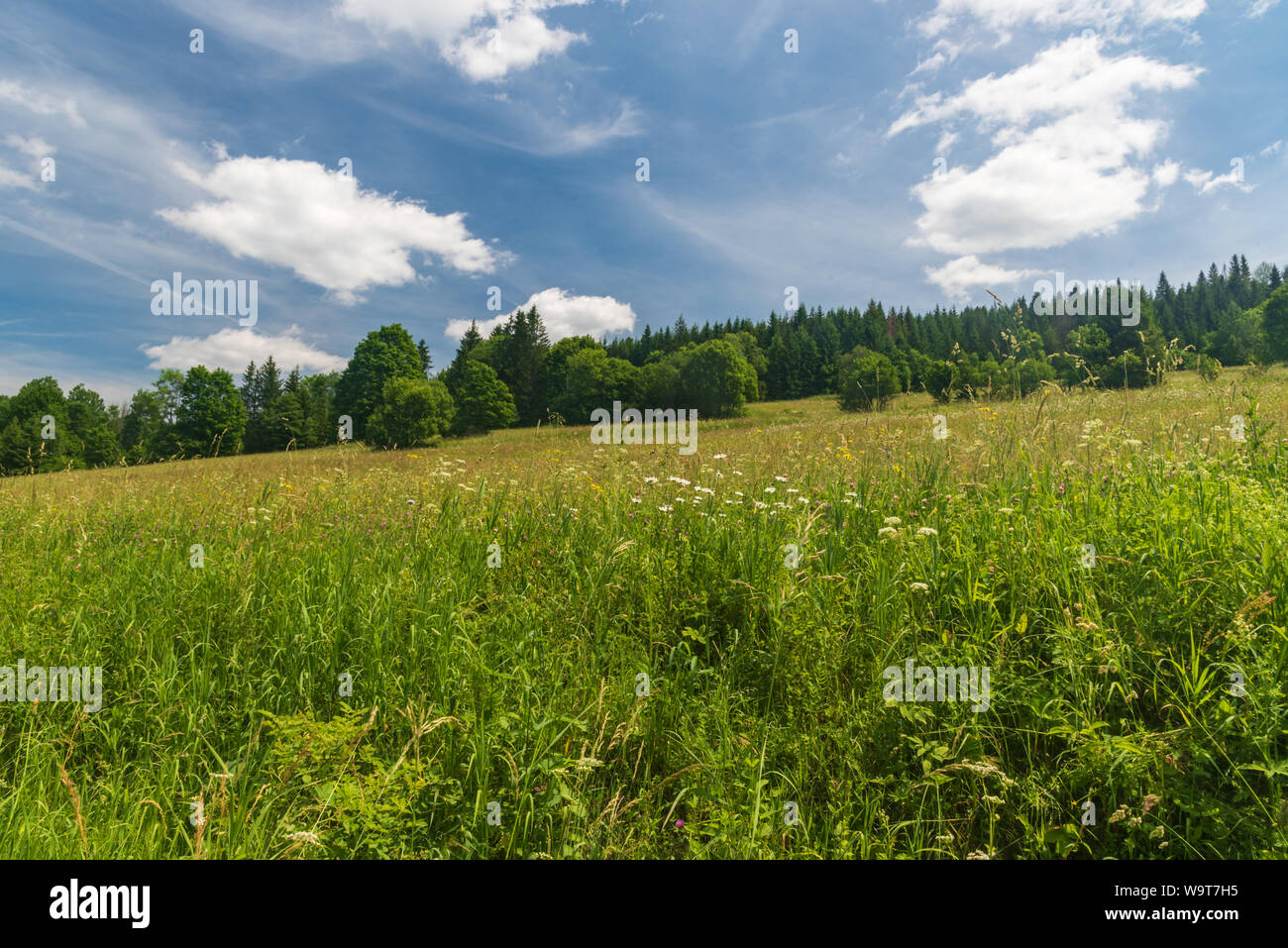 early summer meadow with trees around and blue sky with clouds on place of former village Riecnica near Nova Bystrica water reservoir in Slovakia Stock Photo