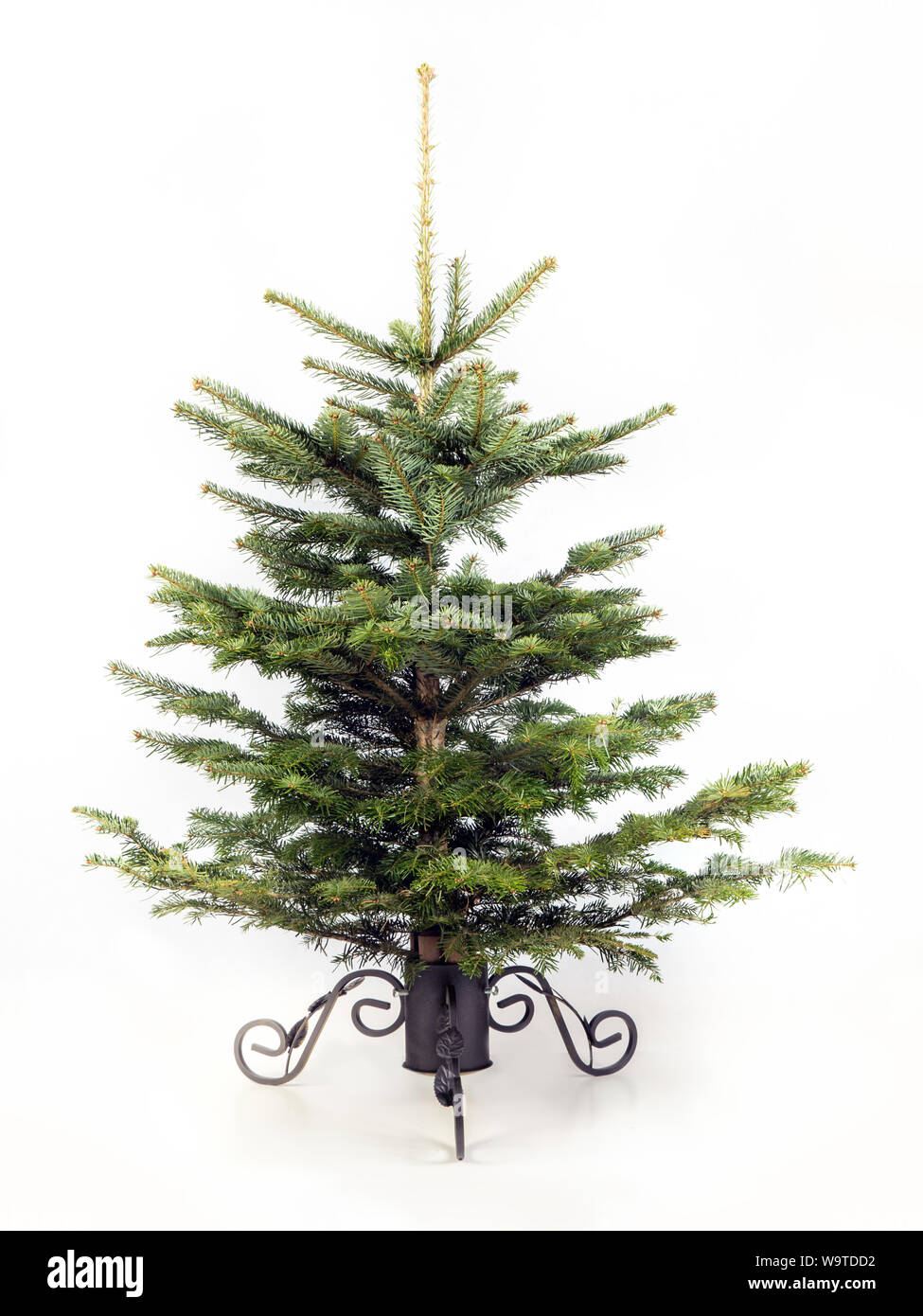 Undecorated Christmas Tree High Resolution Stock Photography And Images Alamy New users enjoy 60% off. https www alamy com shot of clean undecorated christmas tree attached to the stand against white background image264224830 html