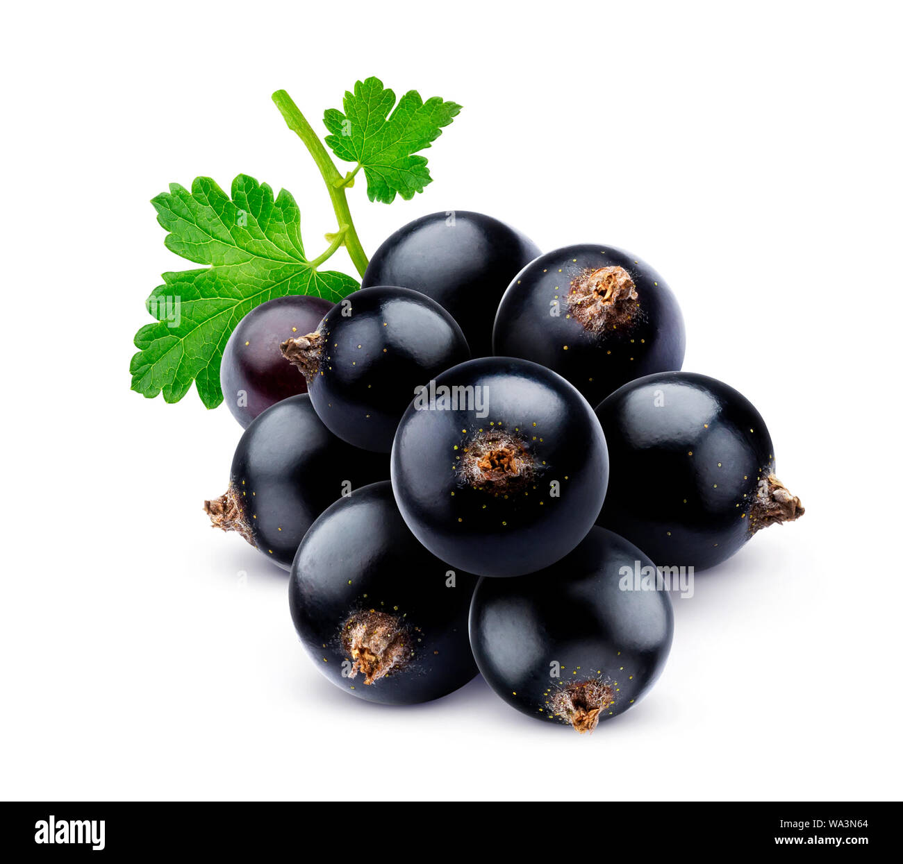 Bunch of black currant isolated on white background Stock Photo