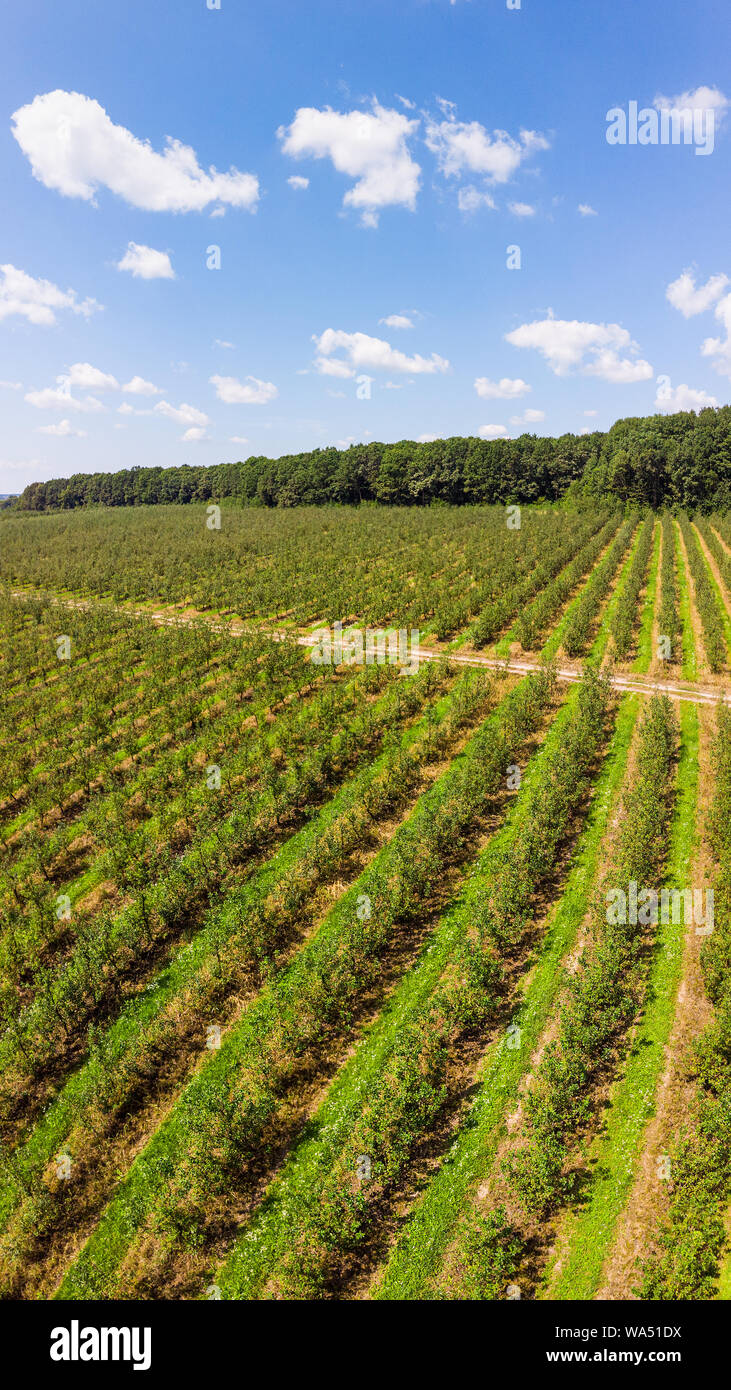 Aerial view of apple orchard with beautiful blue sky on background, vertical landscape. Themes of agro-industrial business and gardening Stock Photo