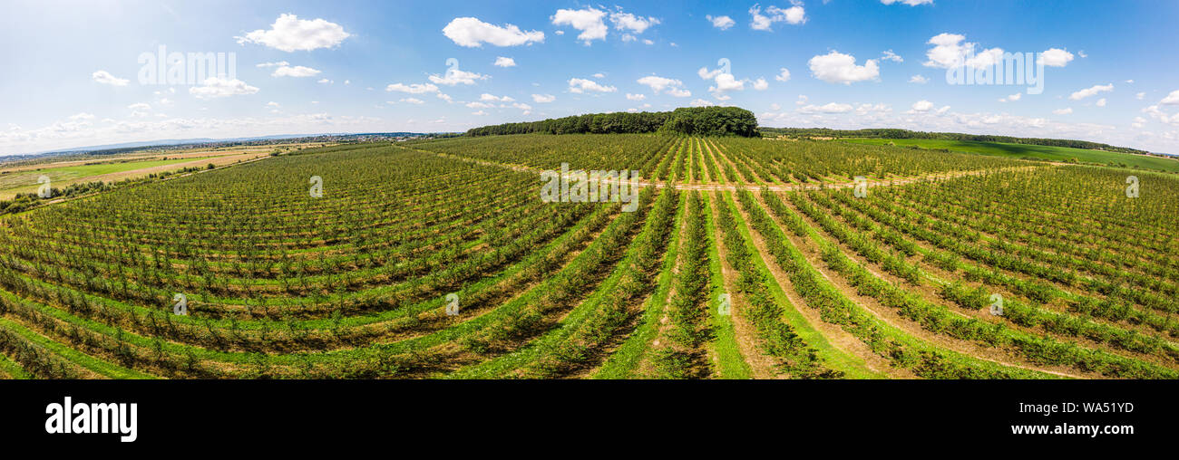 Aerial view of apple orchard with beautiful blue sky on background, panoramic landscape. Themes of agro-industrial business and gardening Stock Photo