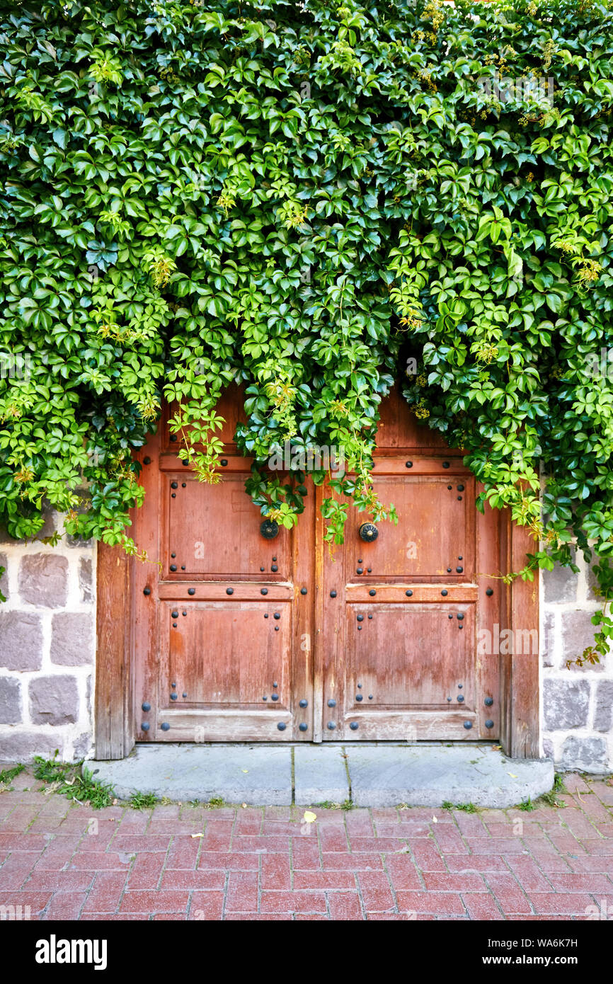 Traditional wooden door of a house covered with vine green leaves Stock Photo