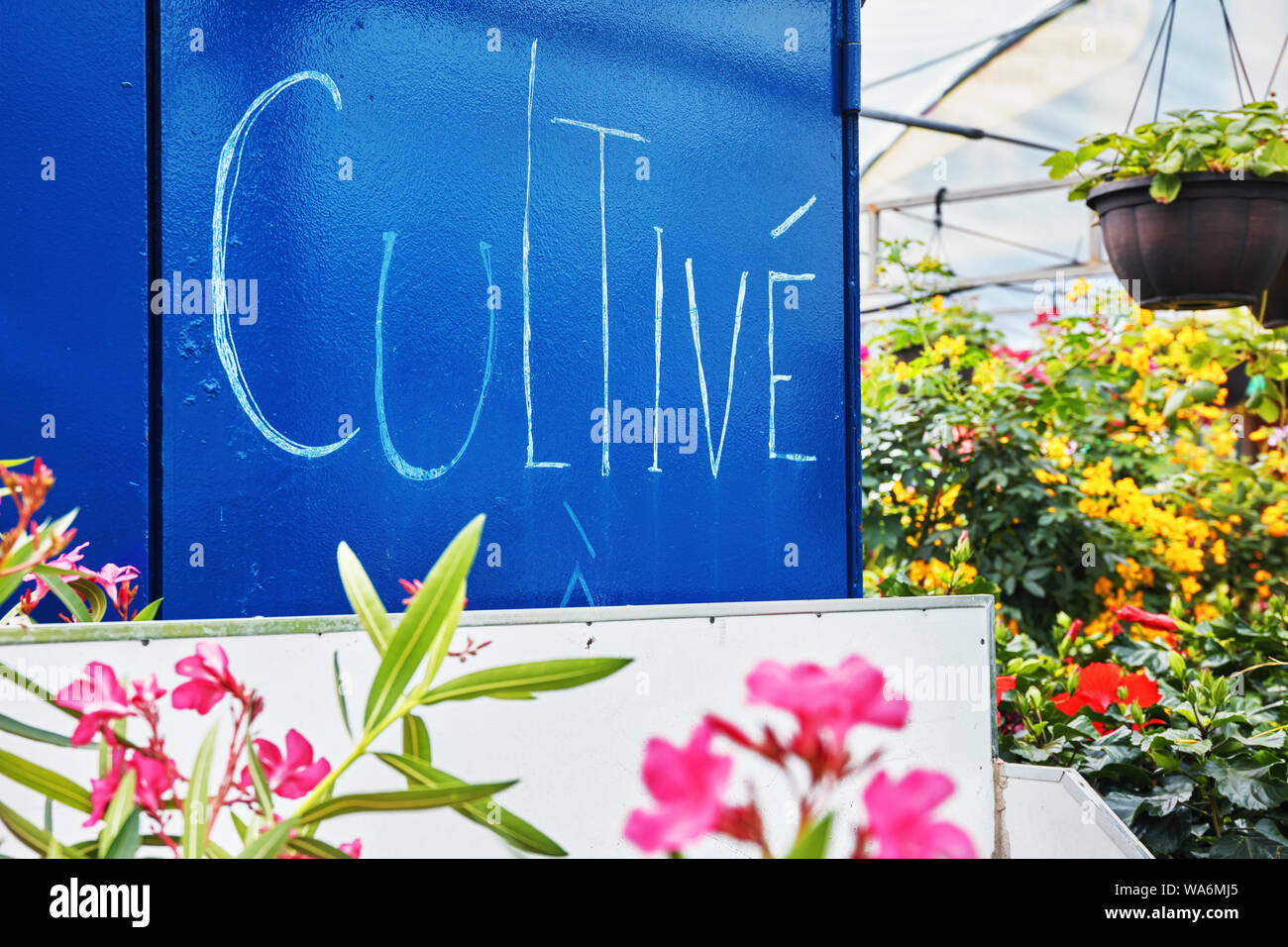 The word cultivate written in French in a flower market greeenhouse Stock Photo