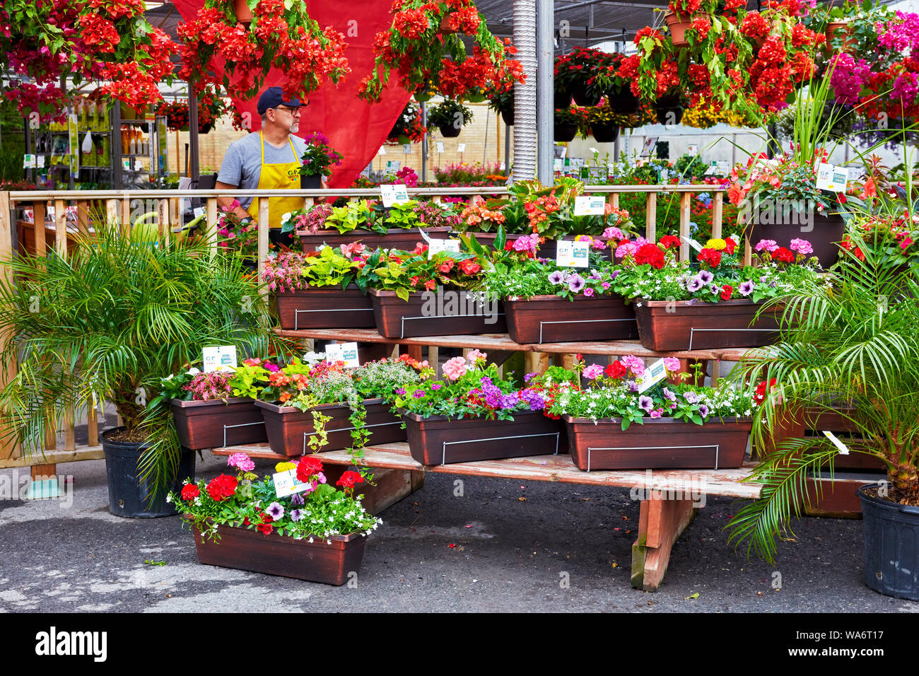 Colorful flowers and a florist salesperson at Atwater flower market in Montreal, Quebec, Canada. Stock Photo
