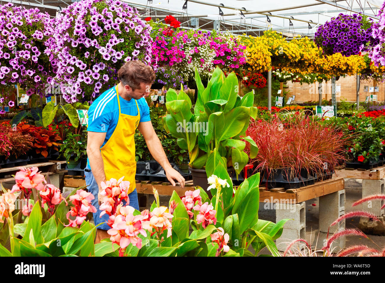 Florist truncates and arranges flowers and plants at Atwater flower market in Montreal, Quebec, Canada. Stock Photo