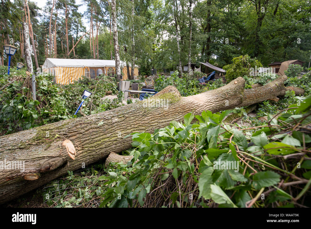 Nuremberg, Germany  19th Aug, 2019  A tree uprooted by a