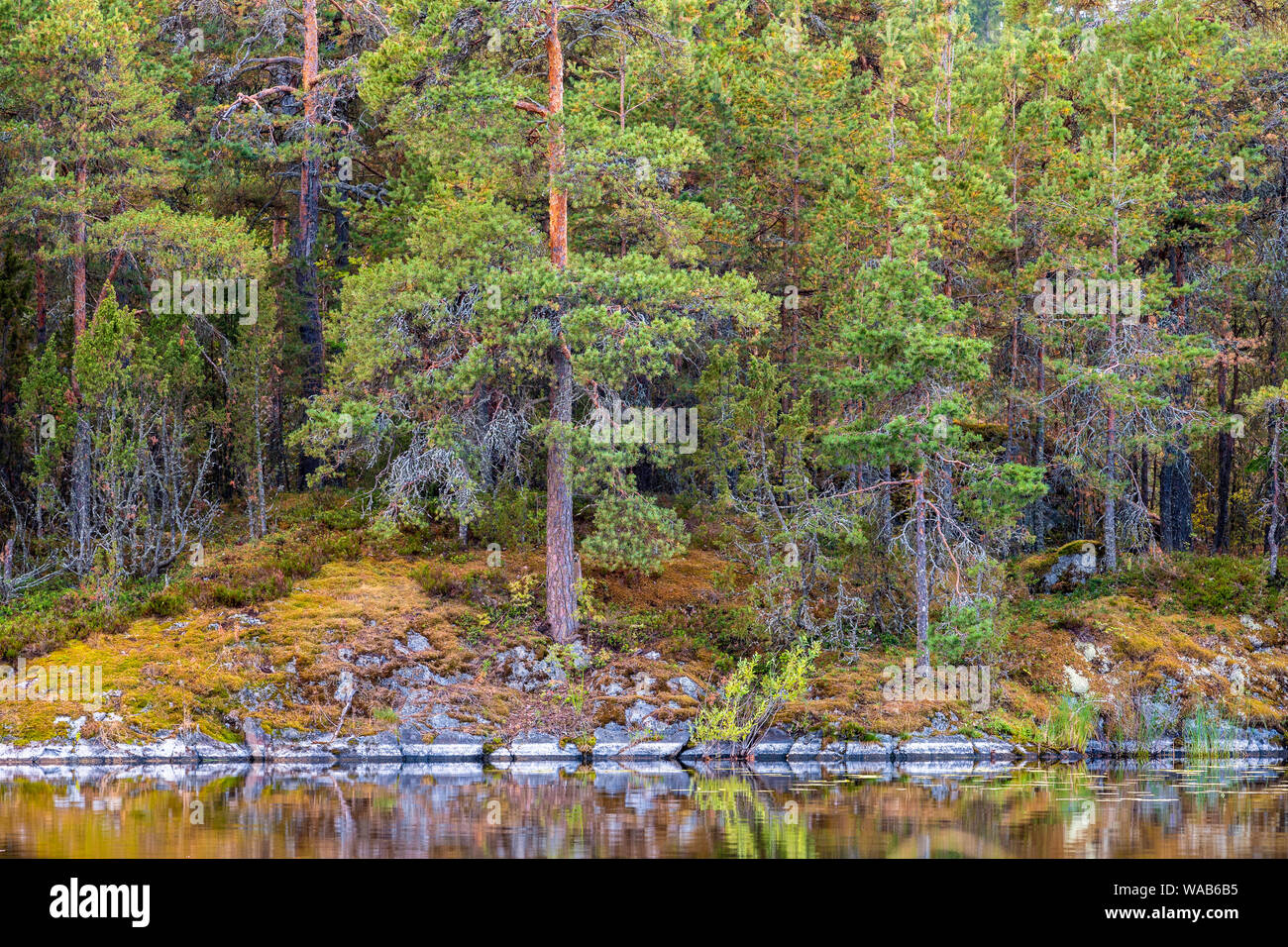 Finnish boreal forest with rocks, moss and fern at lake Saimaa, Finland Stock Photo