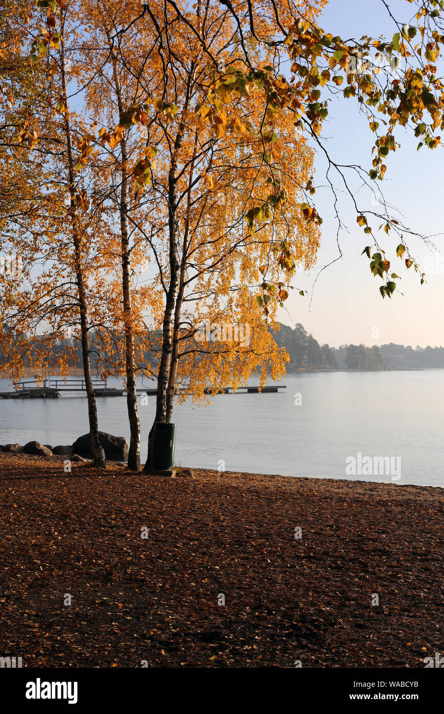 Trees with yellow autumn / fall leaves by the Baltic Sea during a stunning sunset / sunrise in Espoo, Finland. Amazing, scenic landscape image. Stock Photo