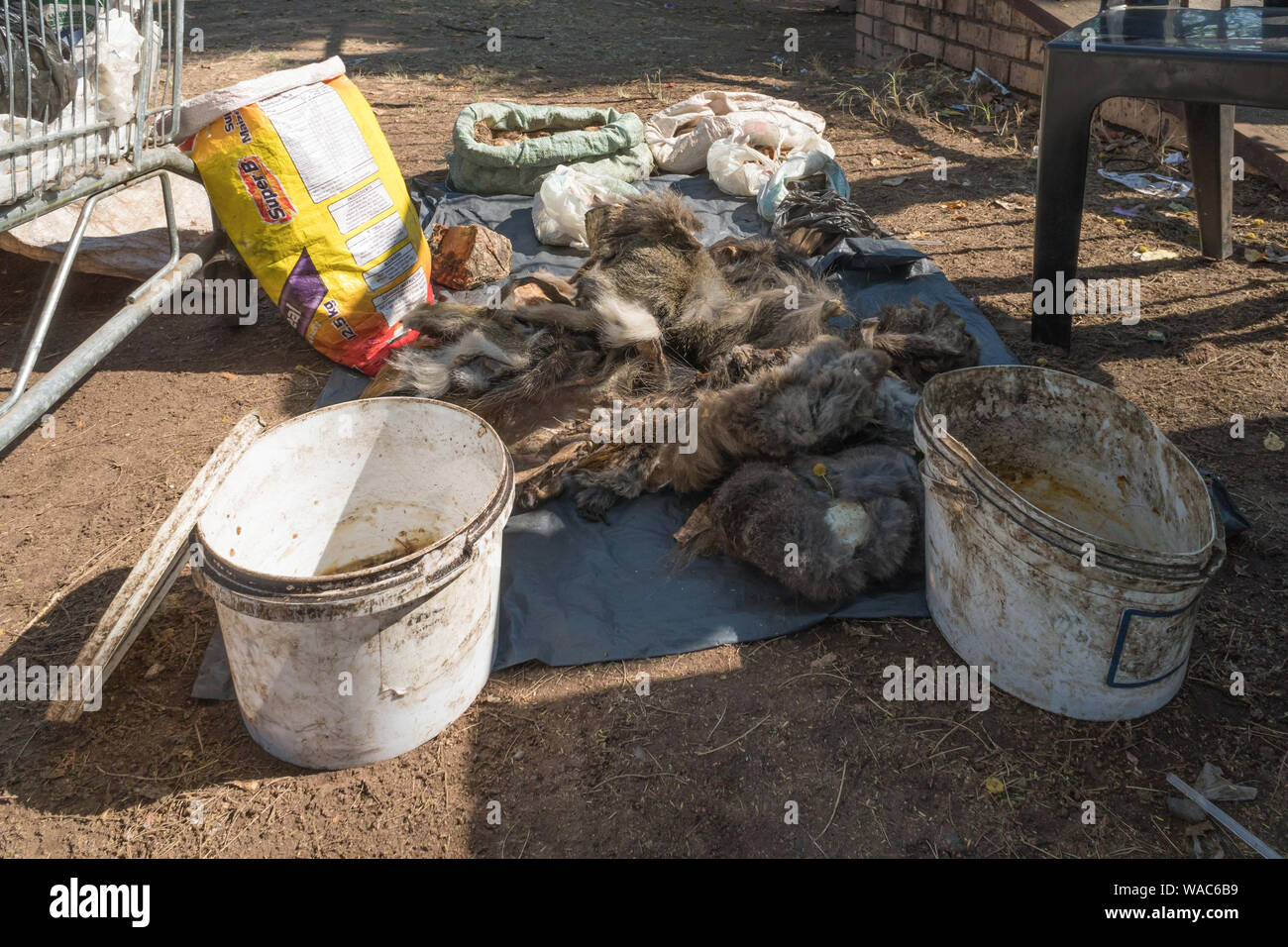 African muti or muthi which is traditional medicine in Southern Africa on display at a street vendor stall in Hazyview, Mpumalanga, South Africa Stock Photo