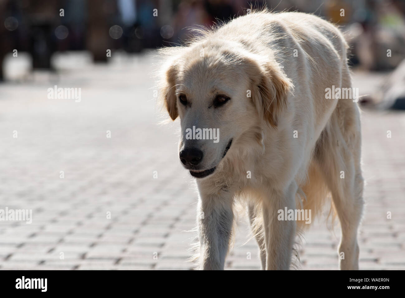 Abandoned homeless stray dog walking alone at the waterfront