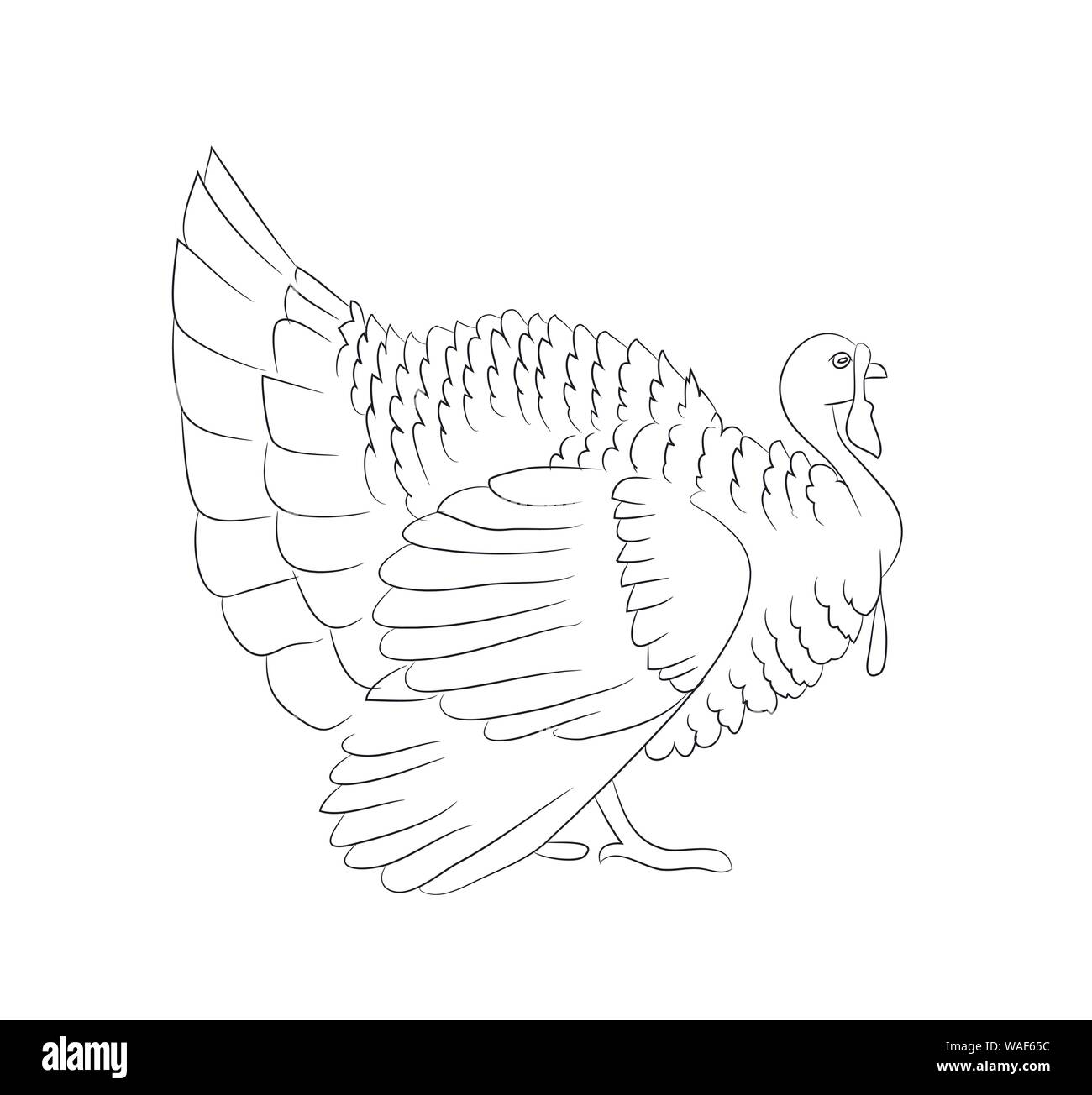 turkey roast for thanksgiving day drawing lines vector white background Stock Vector