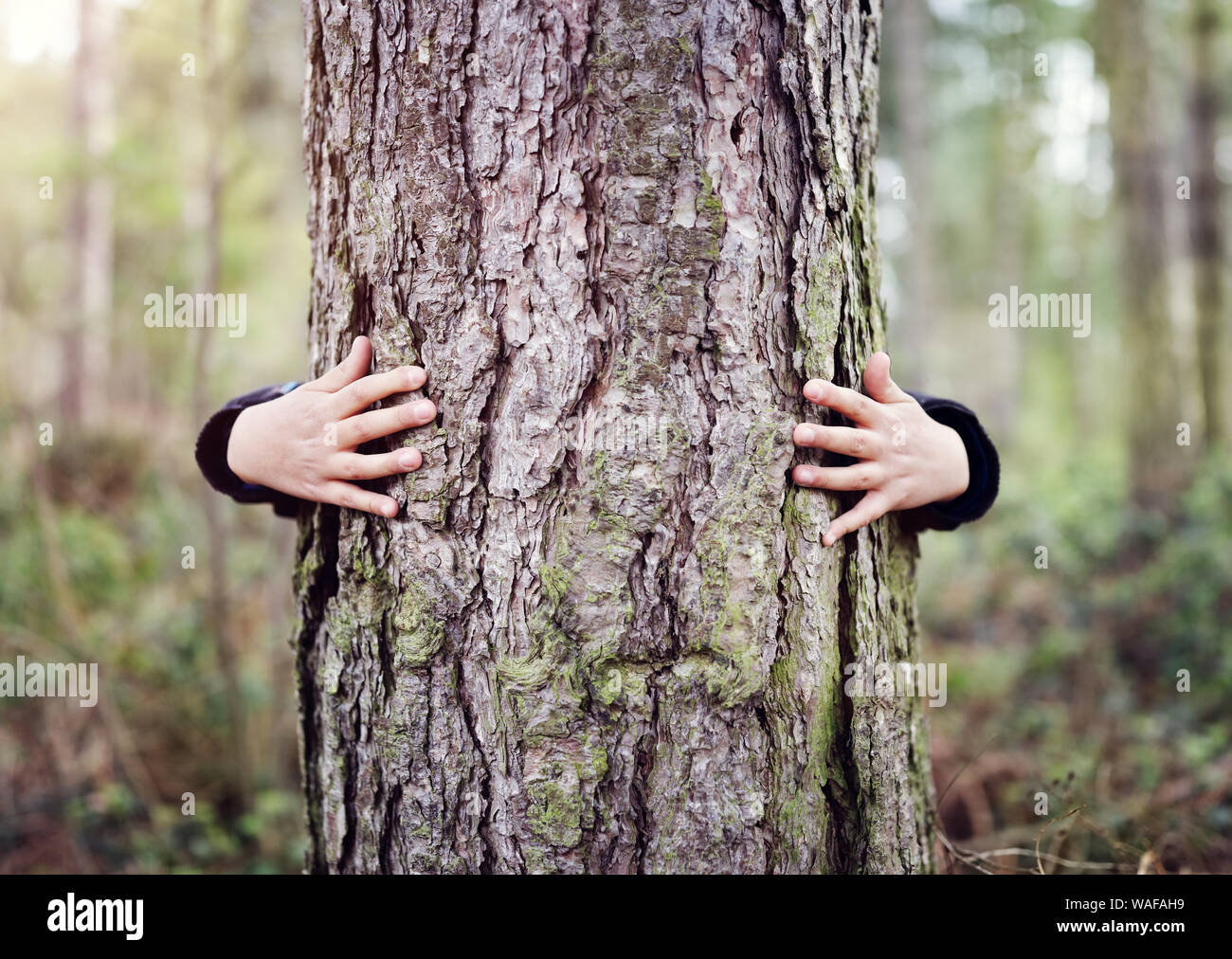 Tree hugging, little boy giving a tree a hug concept for love nature Stock Photo