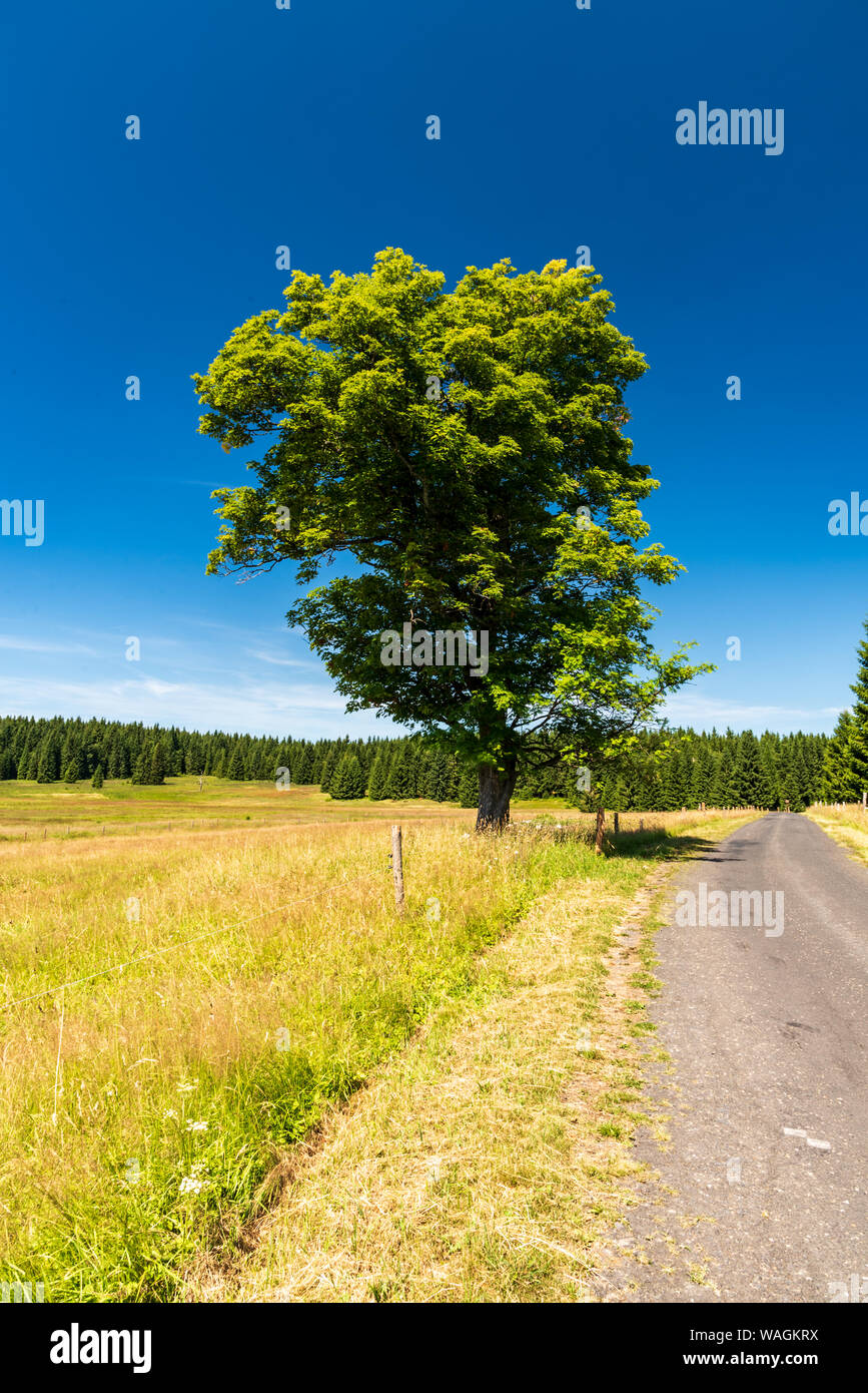beuatiful scenery of Krusne hory mountains in Czech republic near Prebuz settlement with meadow, isolated tree, road, forest on the backgroun and clea Stock Photo