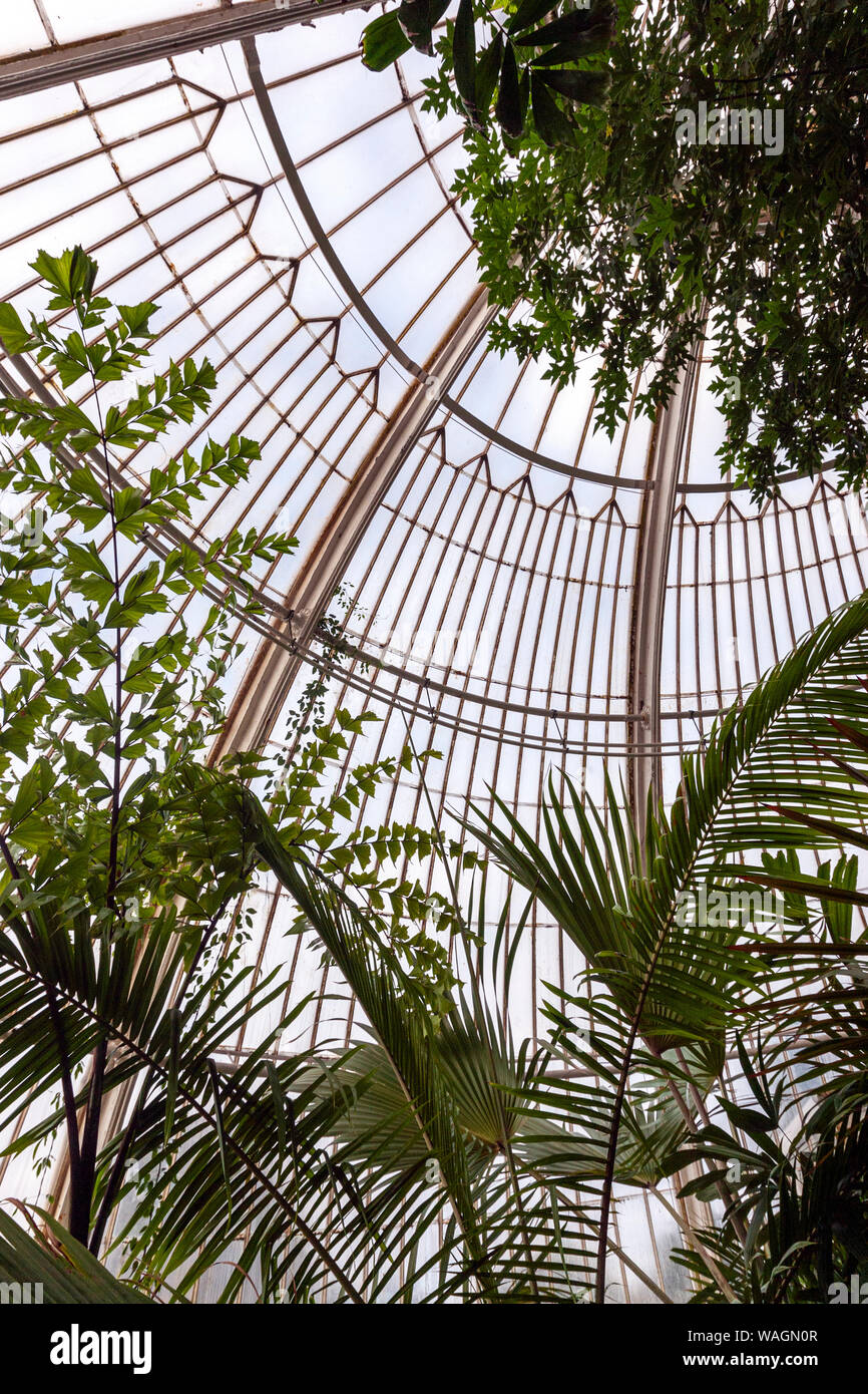 Inside the Palm House, greenhouse, by Charles Lanyon,in Royal Botanic Gardens, Kew, London Borough of Richmond upon Thames, England, UK, Stock Photo