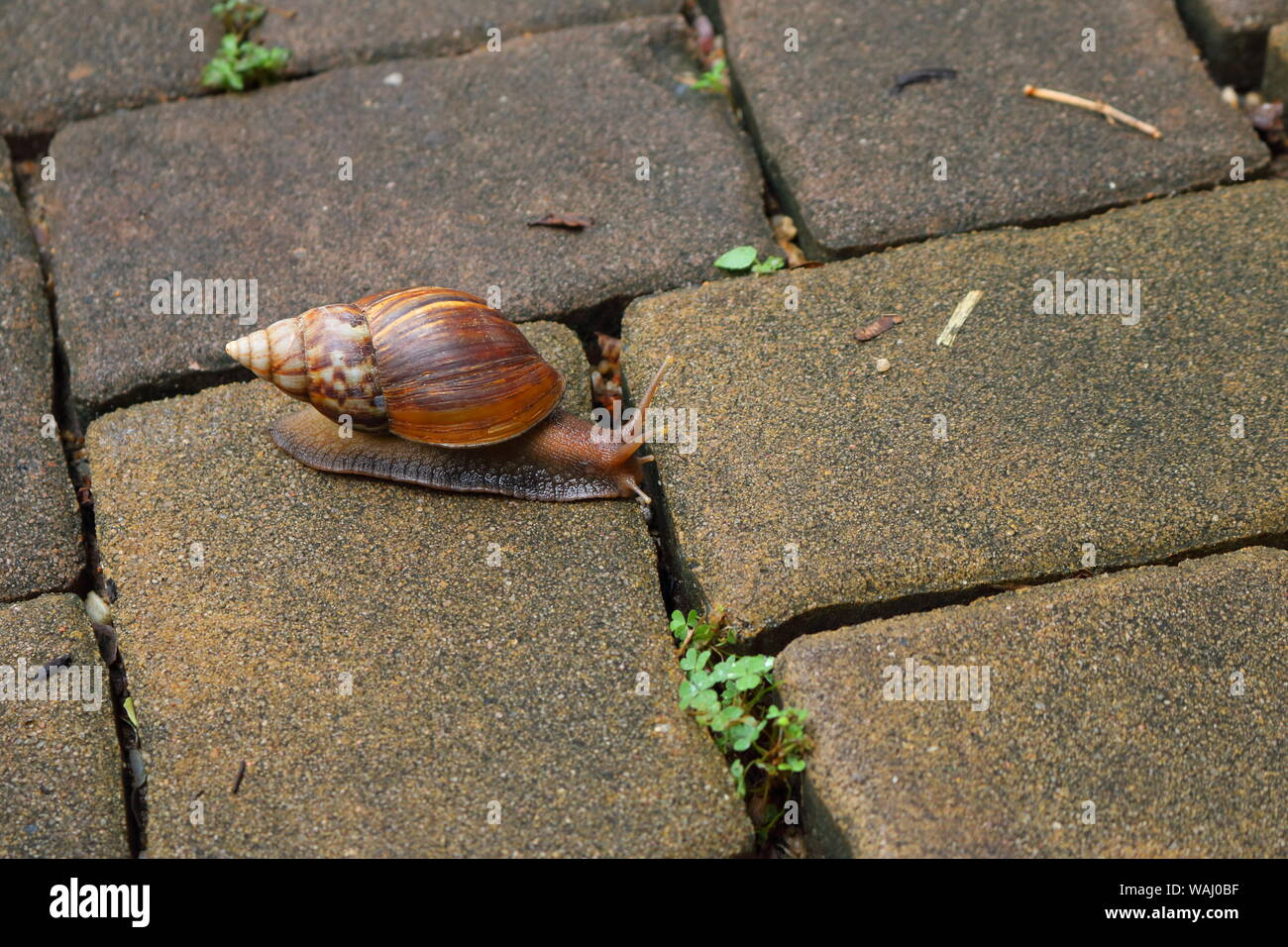 Closeup of a snail crawling on pavement, slow life concept Stock Photo