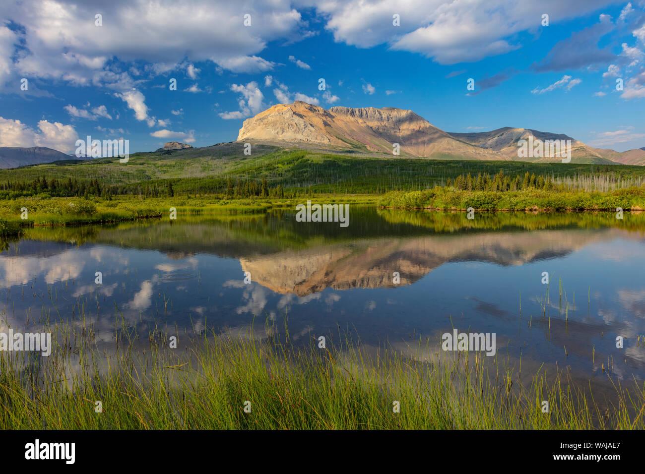 Sofa Mountain reflecting into beaver pond in Waterton Lakes National Park, Alberta, Canada Stock Photo