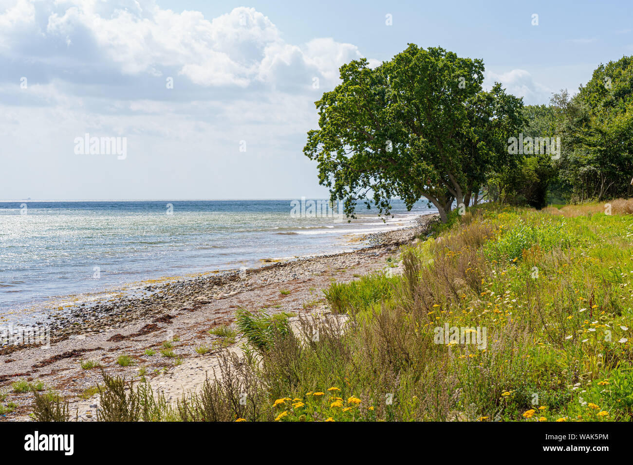 View from the coast over wooden poles in the water to the Baltic Sea Stock Photo