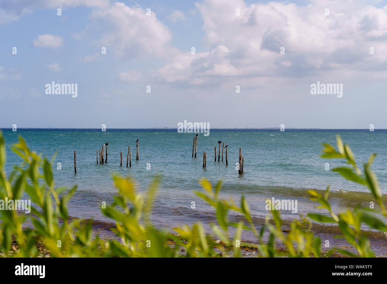 View over wooden poles in the water on the Baltic Sea Stock Photo