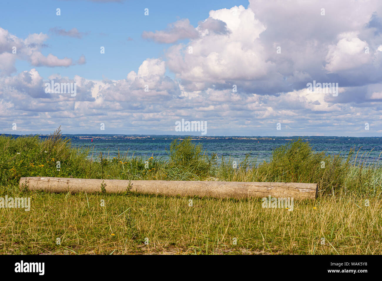 Felled tree trunk on the coast in front of the Baltic Sea Stock Photo