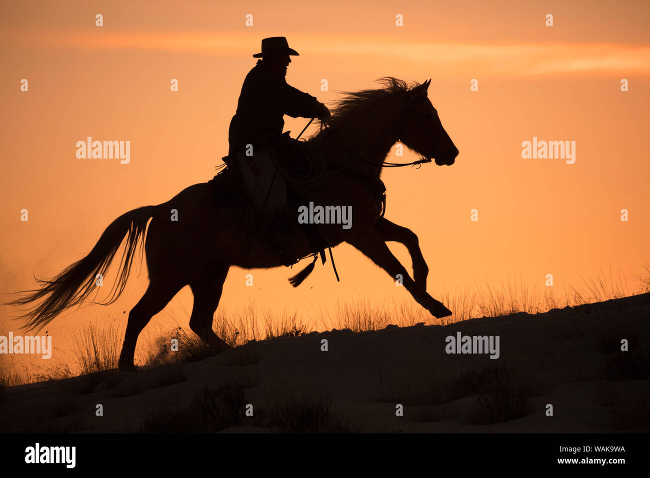 horse drive in winter on hideout ranch shell wyoming cowboy riding his horse silhouetted at sunset mr WAK9WA
