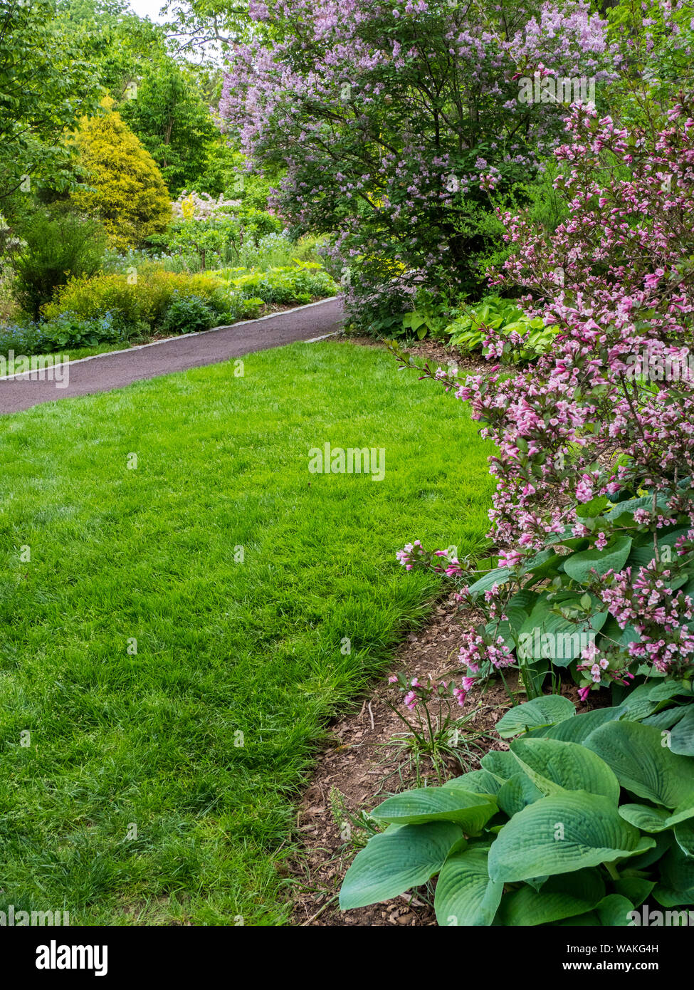 Usa Pennsylvania Pink Flowering Bushes Border A Grassy Lawn In A